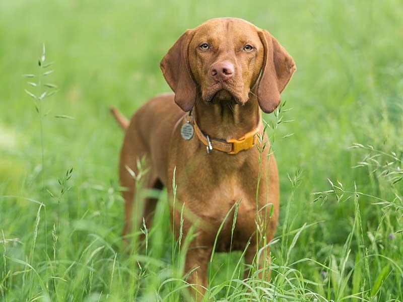 Dog Walking Knowle, Dorridge, Bentley Heath