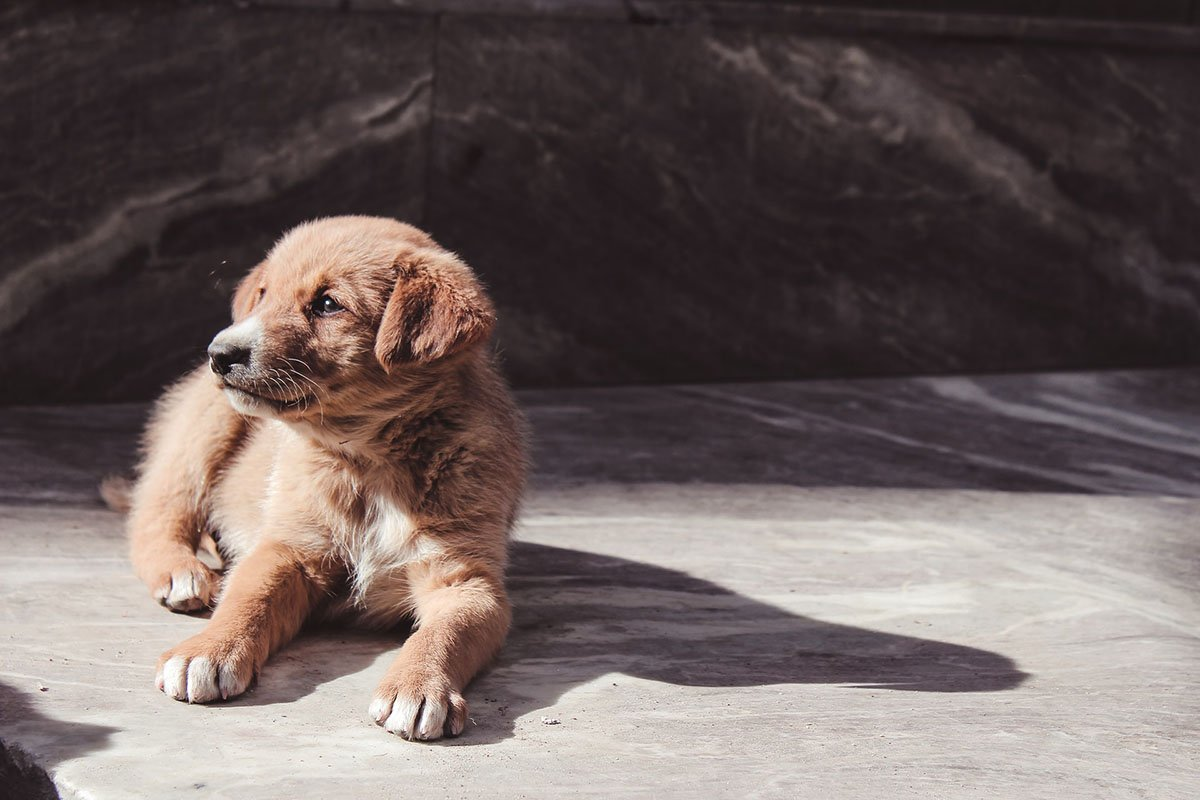 Choosing the Right Dog - Puppy