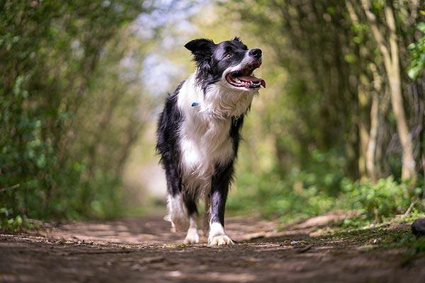Dog Walkers Solihull - Knowle Dog Walker